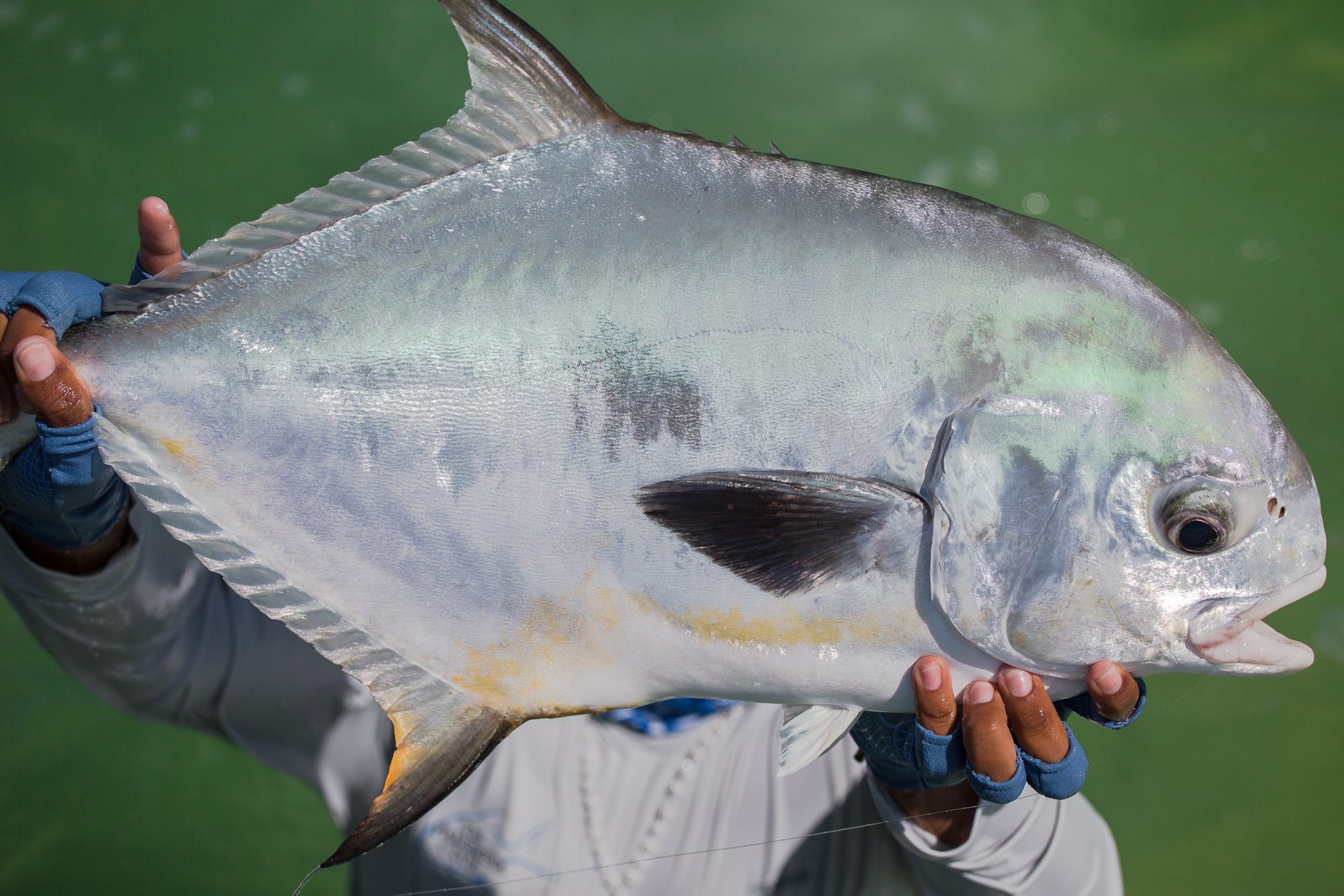 (3/3) Every permit is celebrated, but this one perhaps more so. After a week of tough weather and morning encounter that saw a securely hooked permit broken off by a certain over-zealous angler, the cradling and hoisting of this fine specimen brings a collective sense of elation to both guides and anglers. (photo: Chad Shmukler)