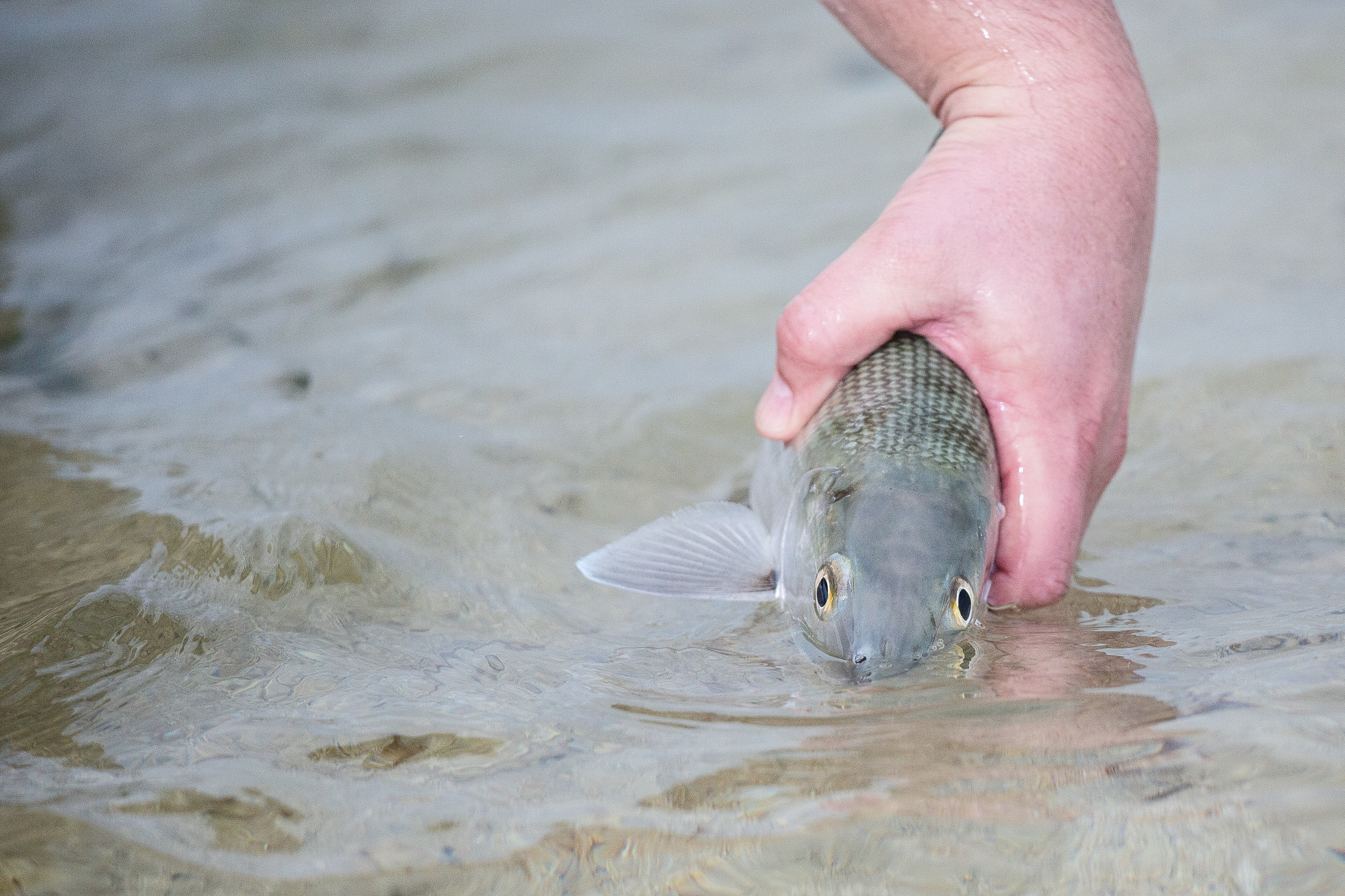(2/3) Storms roll in only moments after arriving on a prime bonefish flat. Yet, despite steady rain and entirely flat light, guide Arun spots a few cruising bonefish 25 yards off. A couple of casts and backing runs later, a healthy bonefish comes to hand (photo: Chad Shmukler).