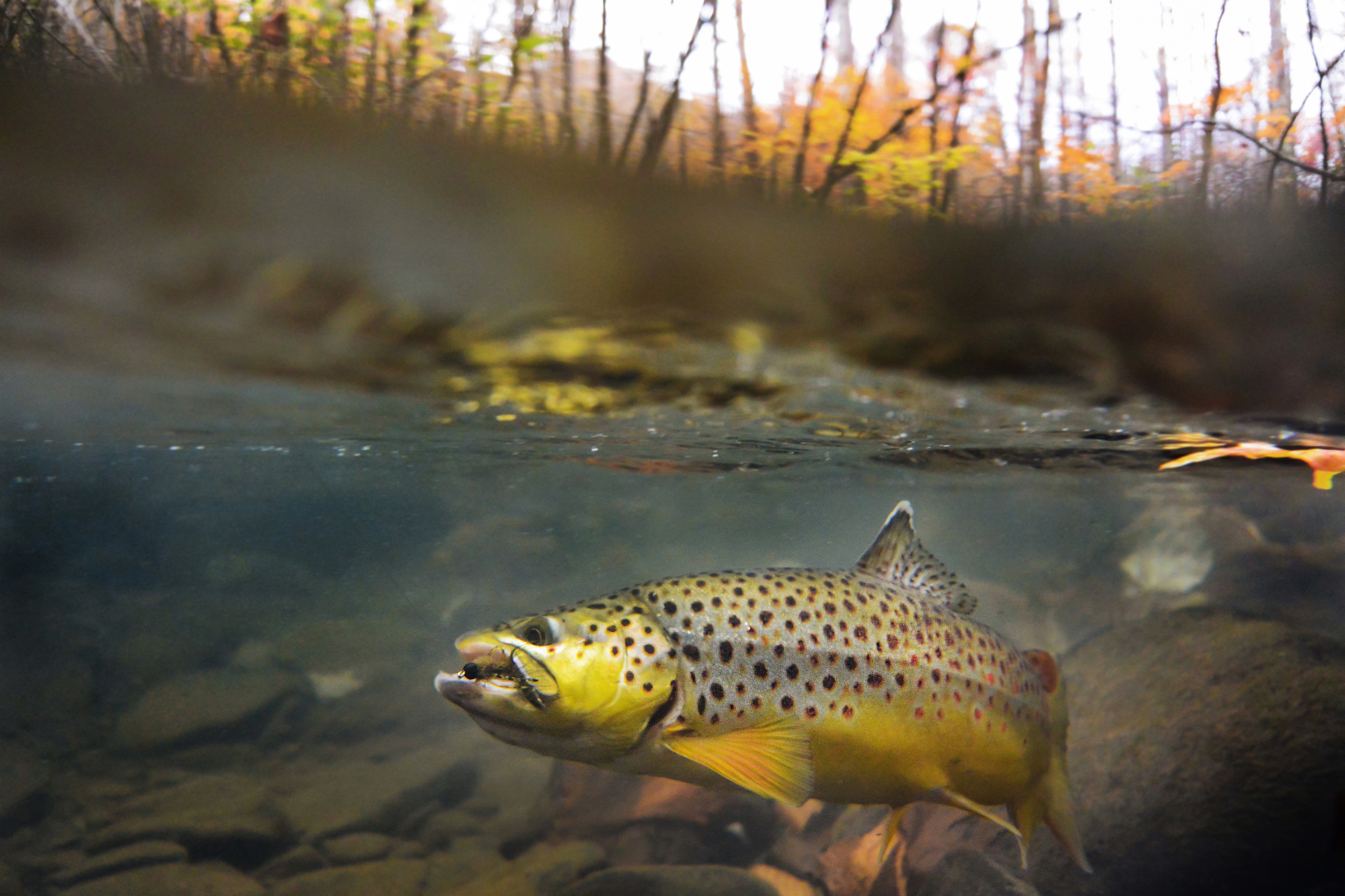 2013 thomas thomas fly fishing photo contest the for Fly fishing photography