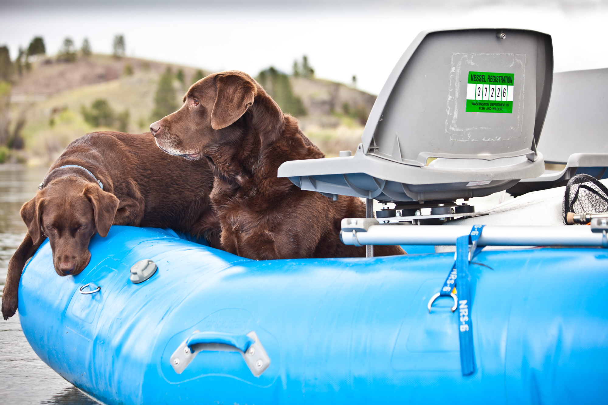 Stowaways, beware. Pate and Violet hold down the raft while their anglers wade in search of sipping trout.