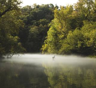 fly fishing in the mist