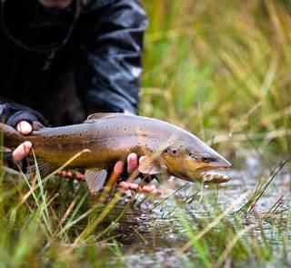 rio blanco brown trout | patagonia | chile