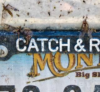 bug splattered montana license plate