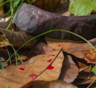 blood trail game