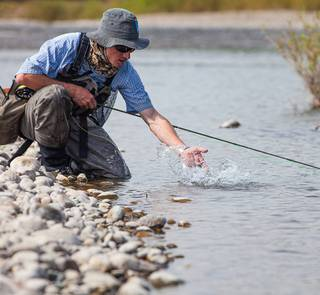rainbow trout release - fly fishing