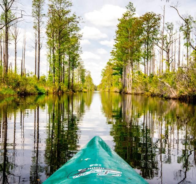 kayaking the Okefenokee Swamp