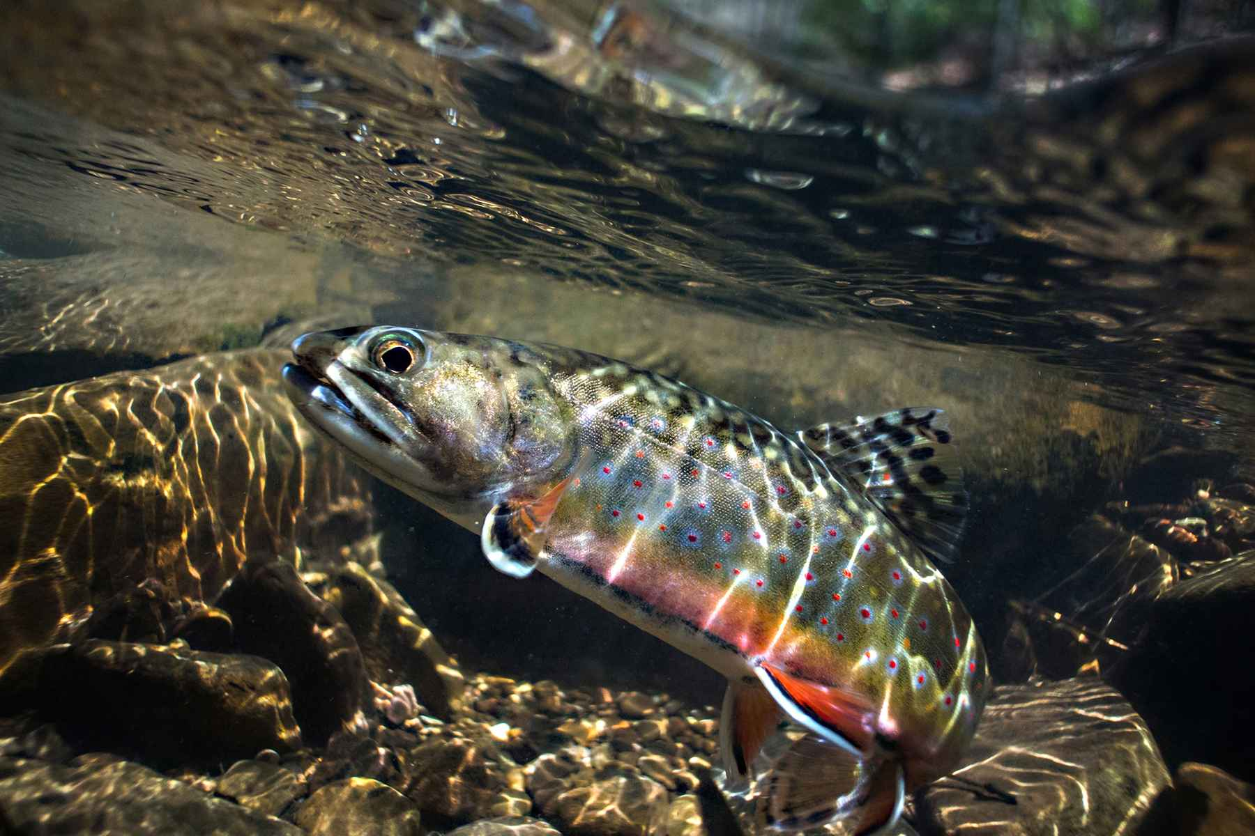 How I inherited my own trout stream