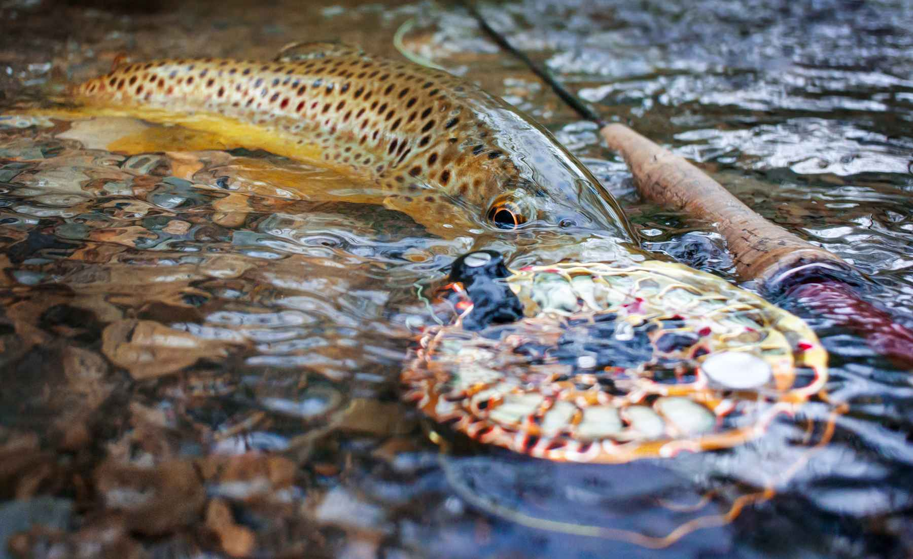 Fly Fishing Water Rings