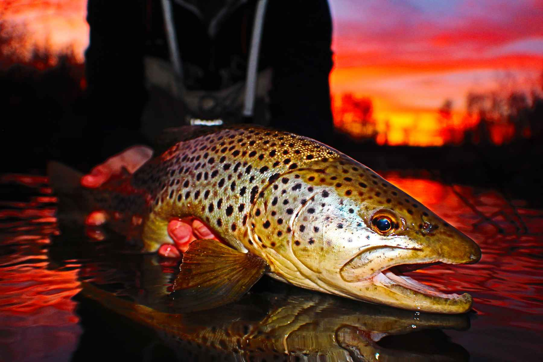 Fly fishing Q&A: Mousing at night | Hatch Magazine - Fly