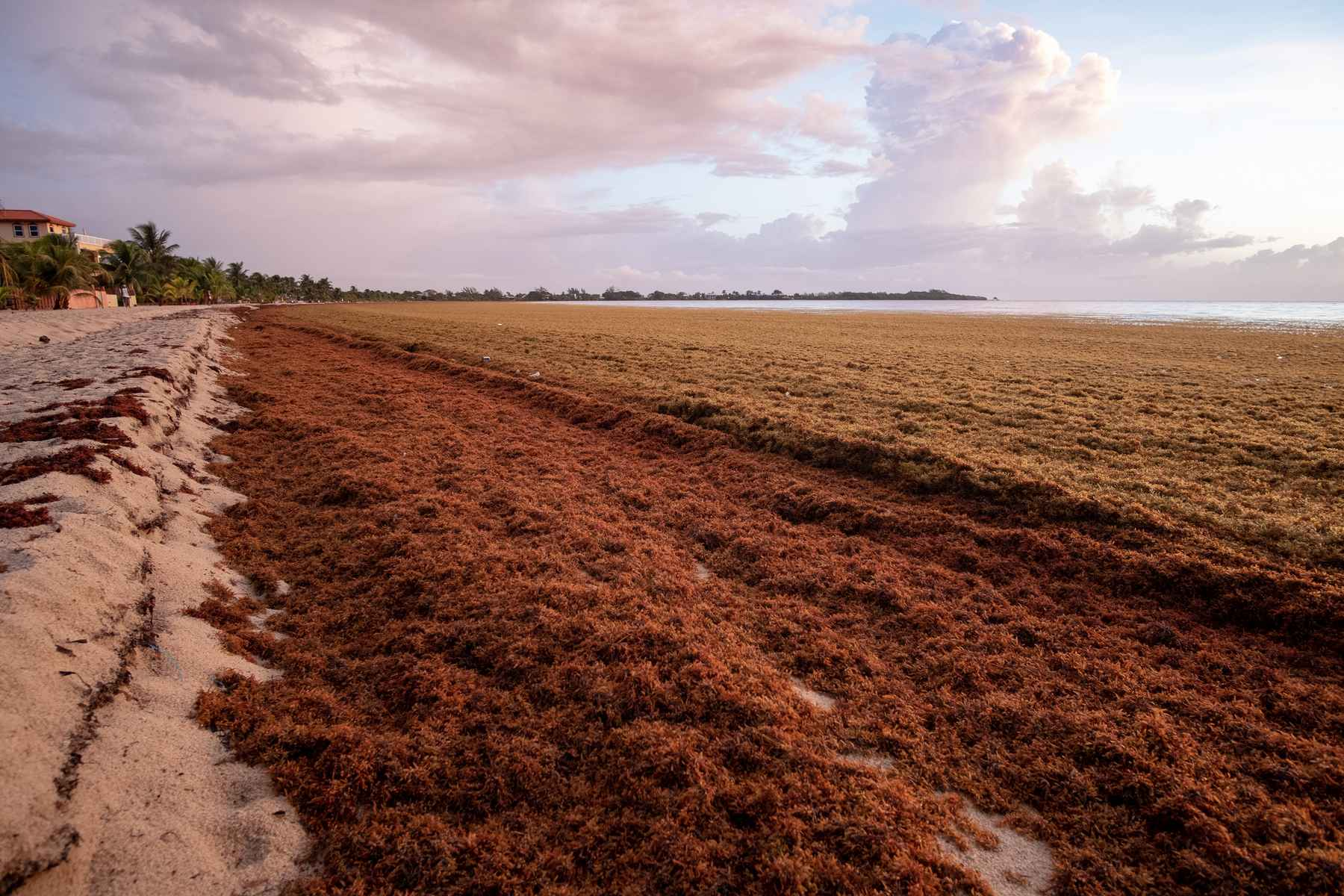 Way too much of a good thing: Sargassum and the sea | Hatch