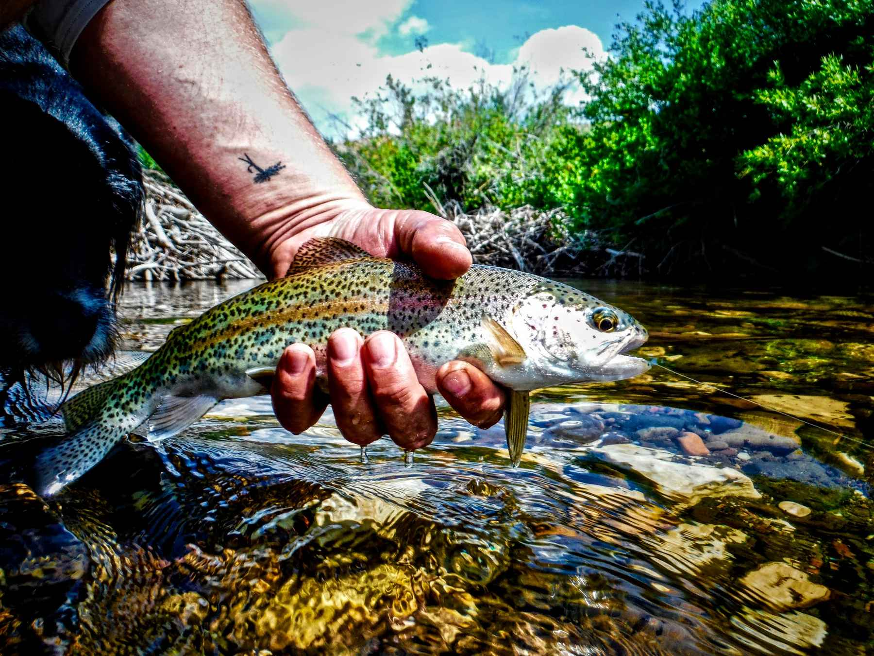 For dry-fly creek freaks, it's the best time of the year