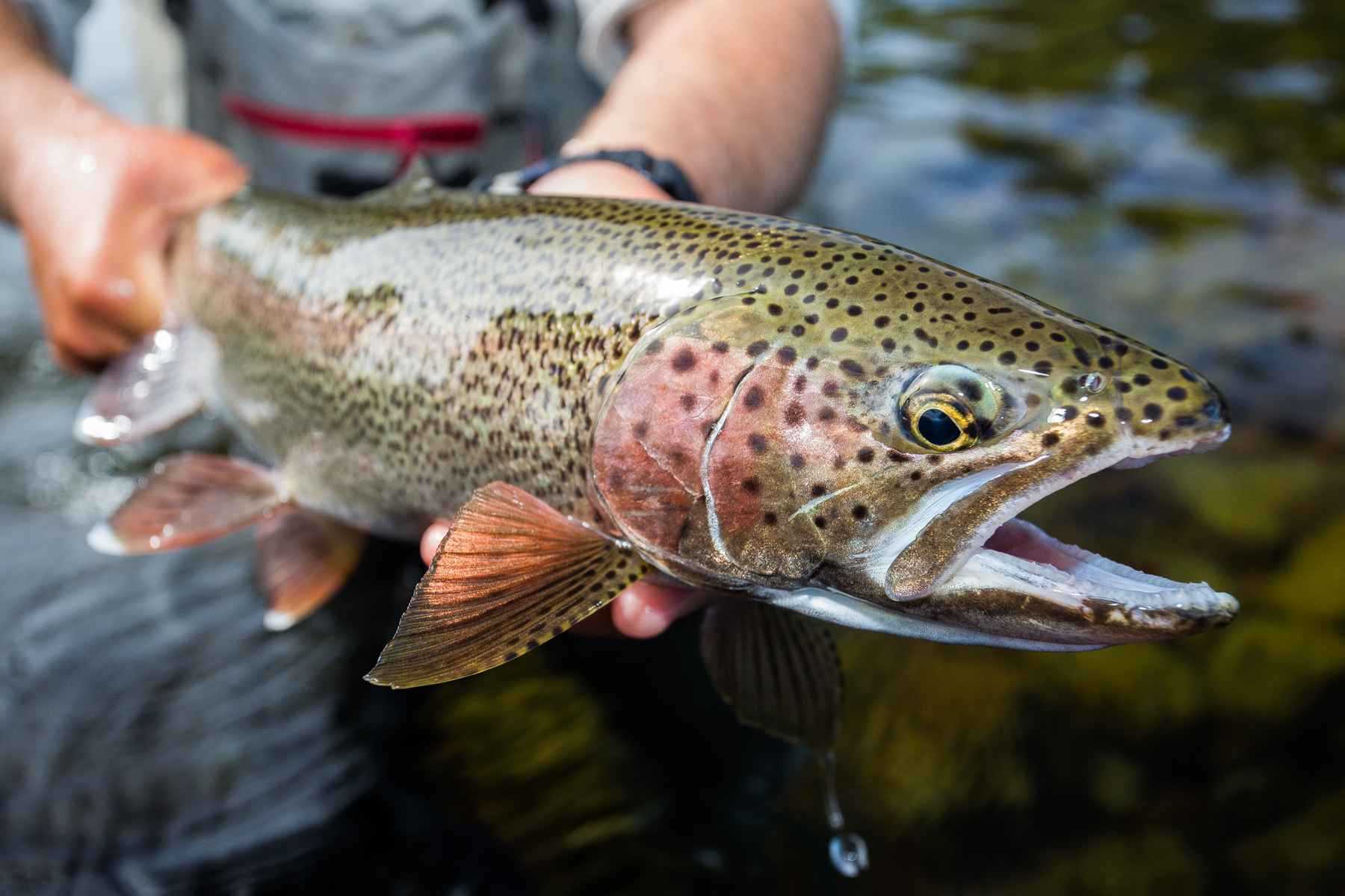 Atop the Angling Mountain: The Five Stages of Fly Fishing