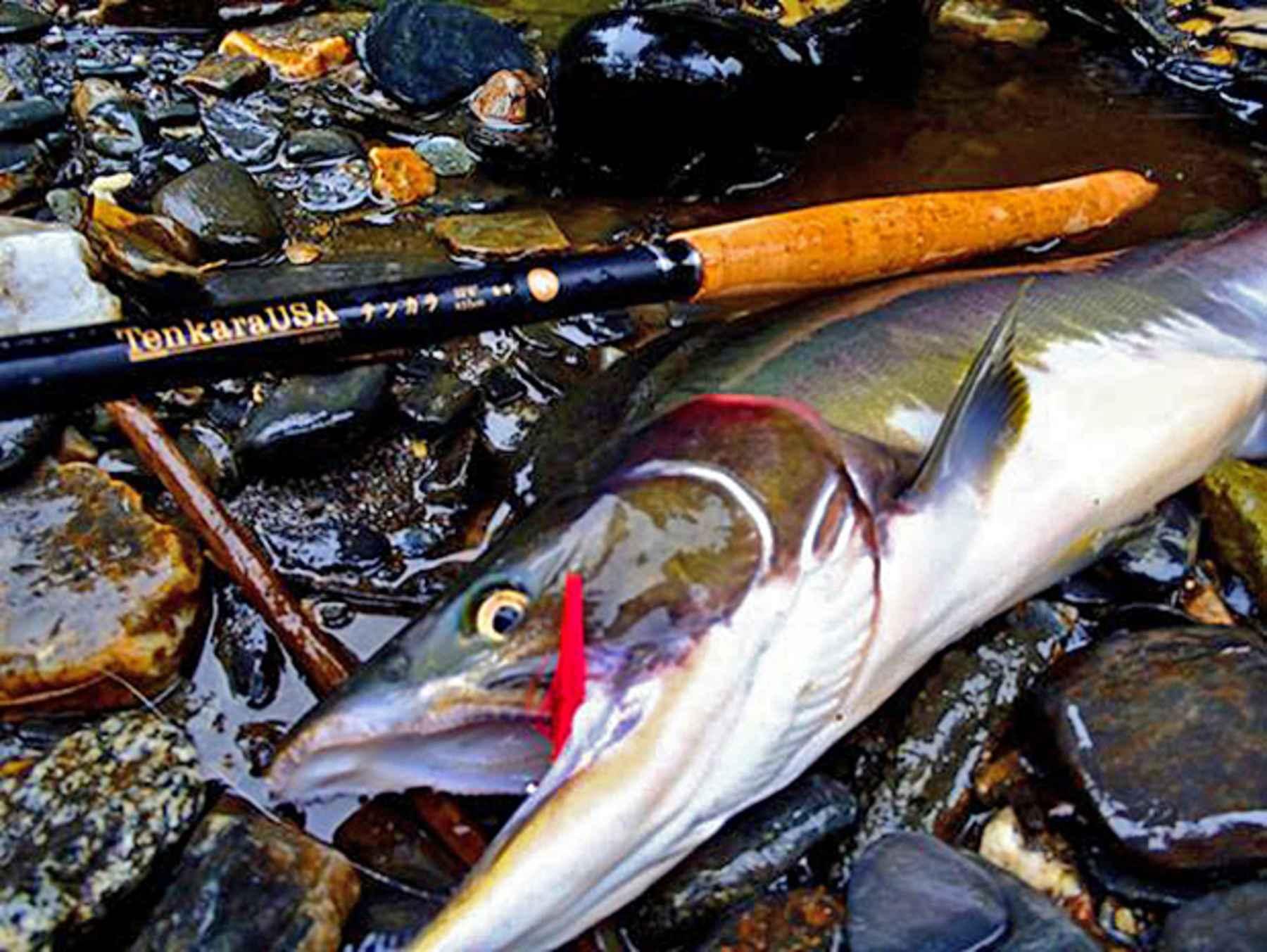 Tenkara for salmon sure why not hatch magazine fly for Tenkara fishing rods