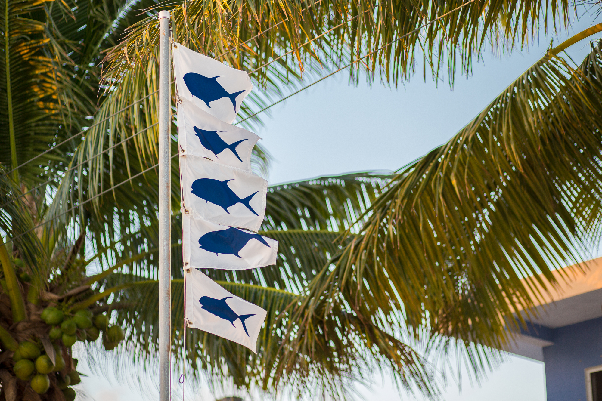 Guests that land a permit hang a flag on the flagpole that adorns the beach in front of the club. With conditions back to normal, 5 flags are hung and admired on day six (photo: Chad Shmukler).