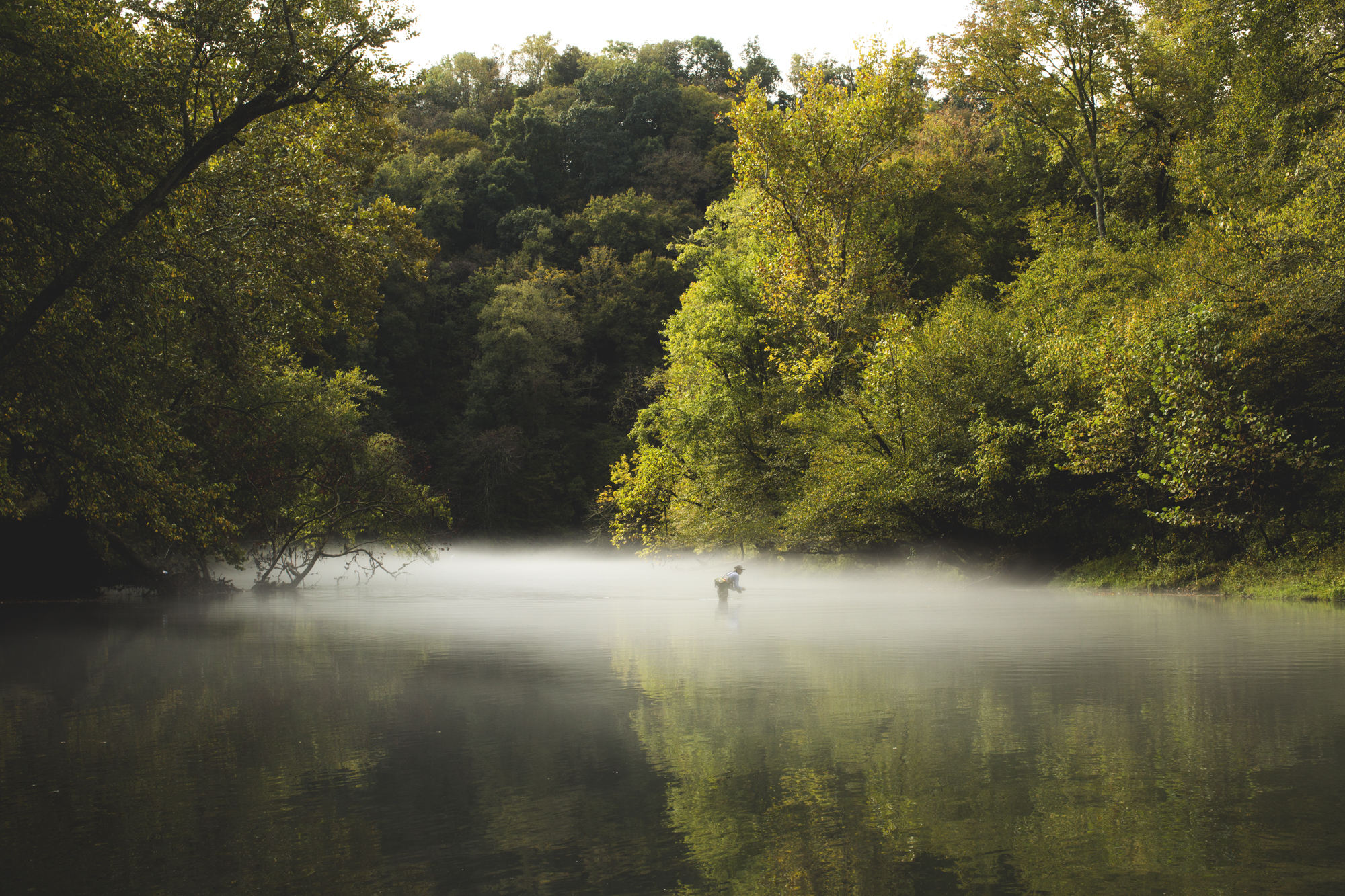 Matt Shaw, at it again, capturing another Tennessee morning moment in this eerily beautiful image.