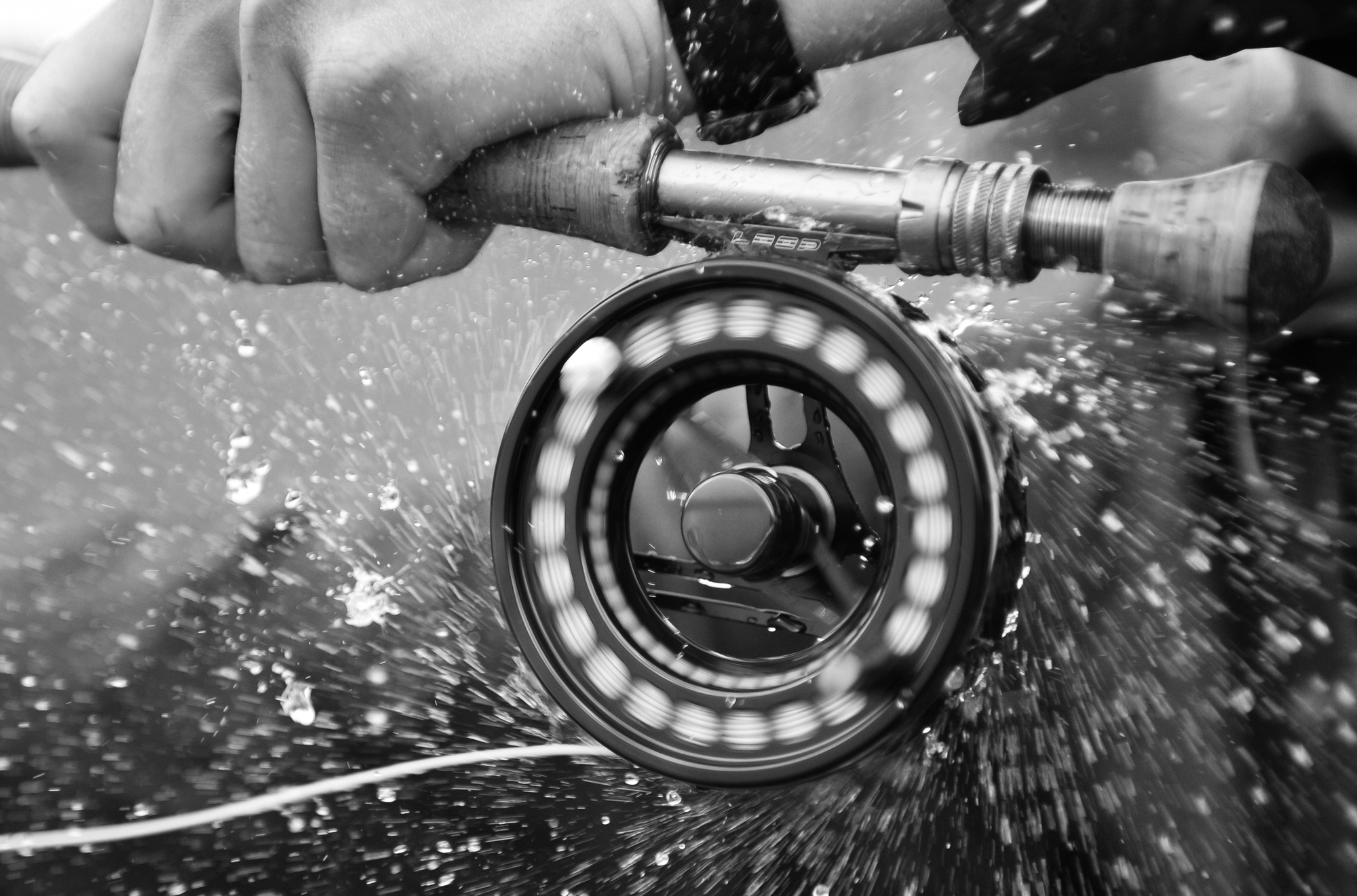 A great action shot of a Loop Opti reel being put to the test by a Madison River rainbow trout.