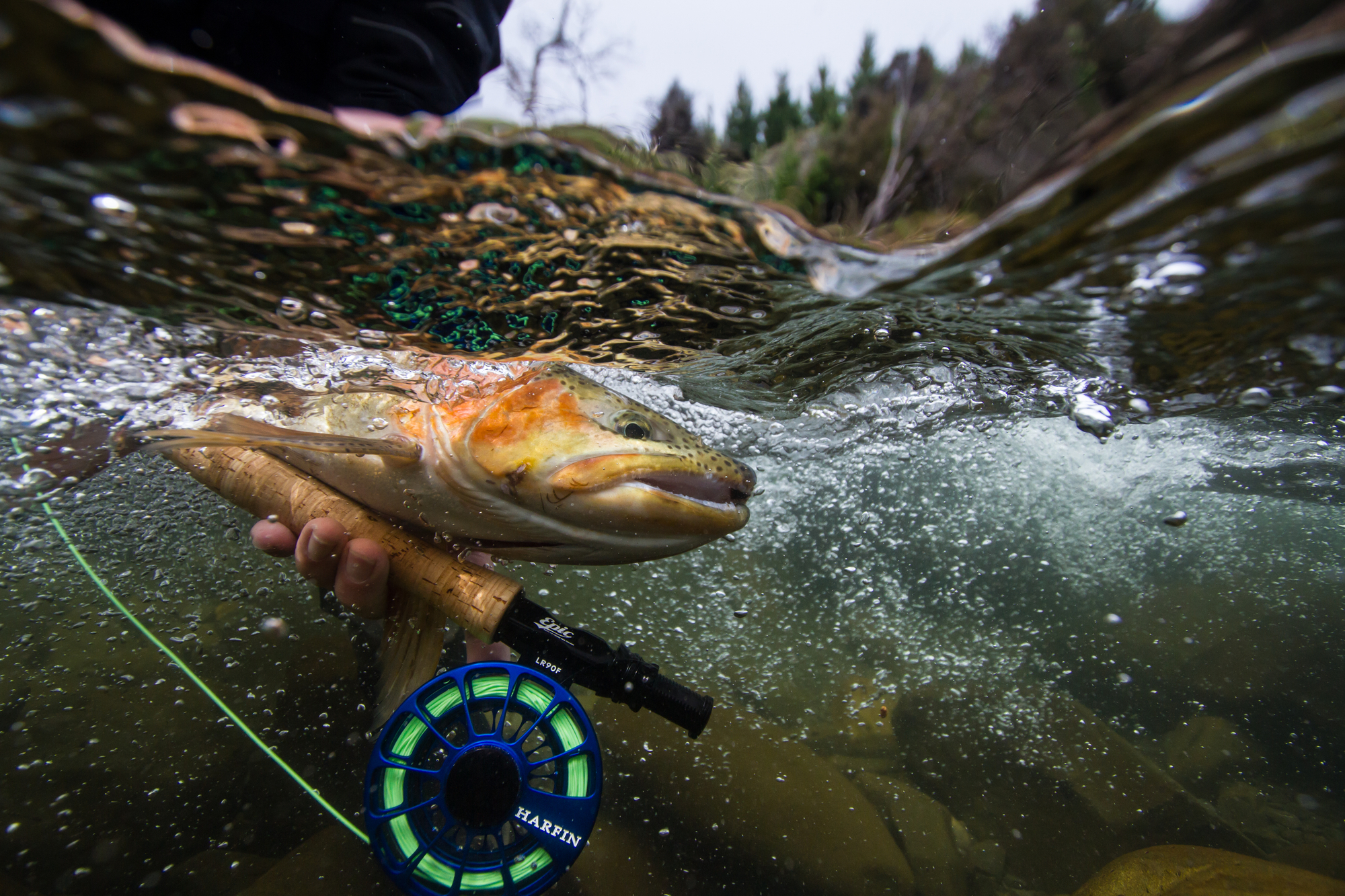 Kiwi Stu Hastie is evidently in the photo contest business. And that's fine. Stu takes his time crafting compelling images that we only want to see more of, like this one of a rainbow trout from Bush Creek in New Zealand.