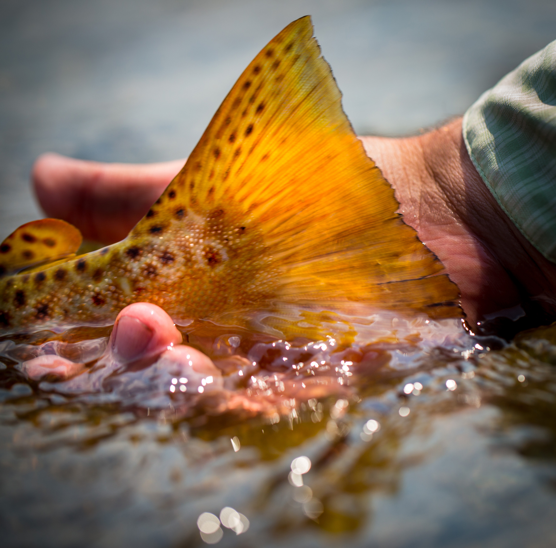 Had this image of the tail of a Clark Fork River brown trout been a bit sharper, there's a good chance it would have walked away with one of this year's prizes. What it lacks in sharpness, however, was countered well enough by good composition and brilliant color to land it amongst many of the judges top 10.
