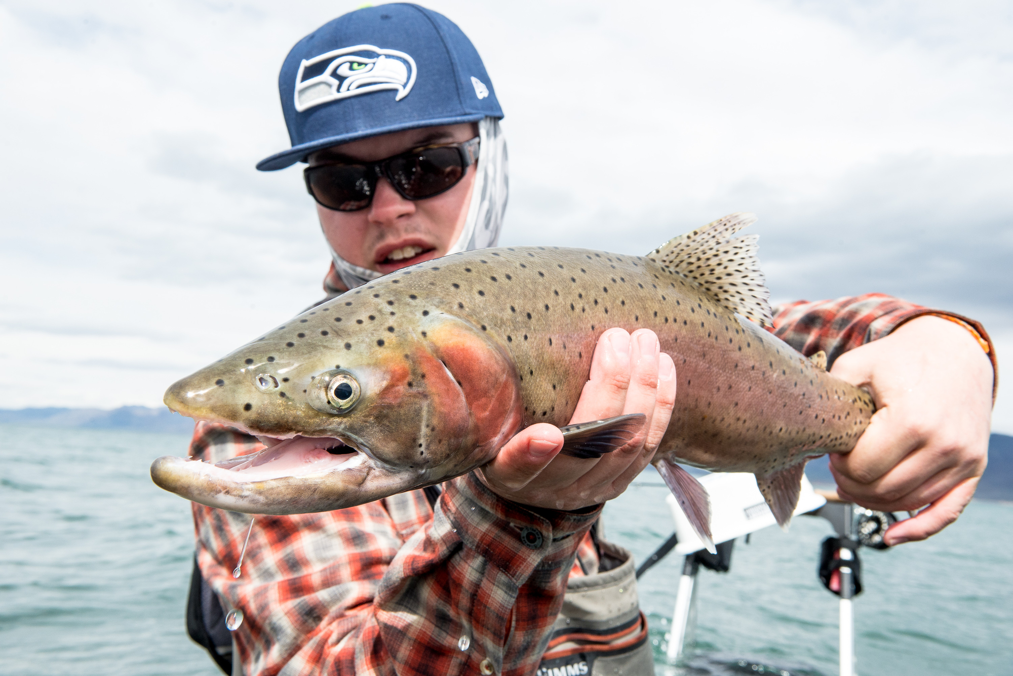 (1/2) The Lahontan Cutthroat are a fine looking species, and pose well for the camera. When fishing sinking lines, it's important to keep the flies close to the bottom. A weighted front fly can help get your leader down when using foam bugs.