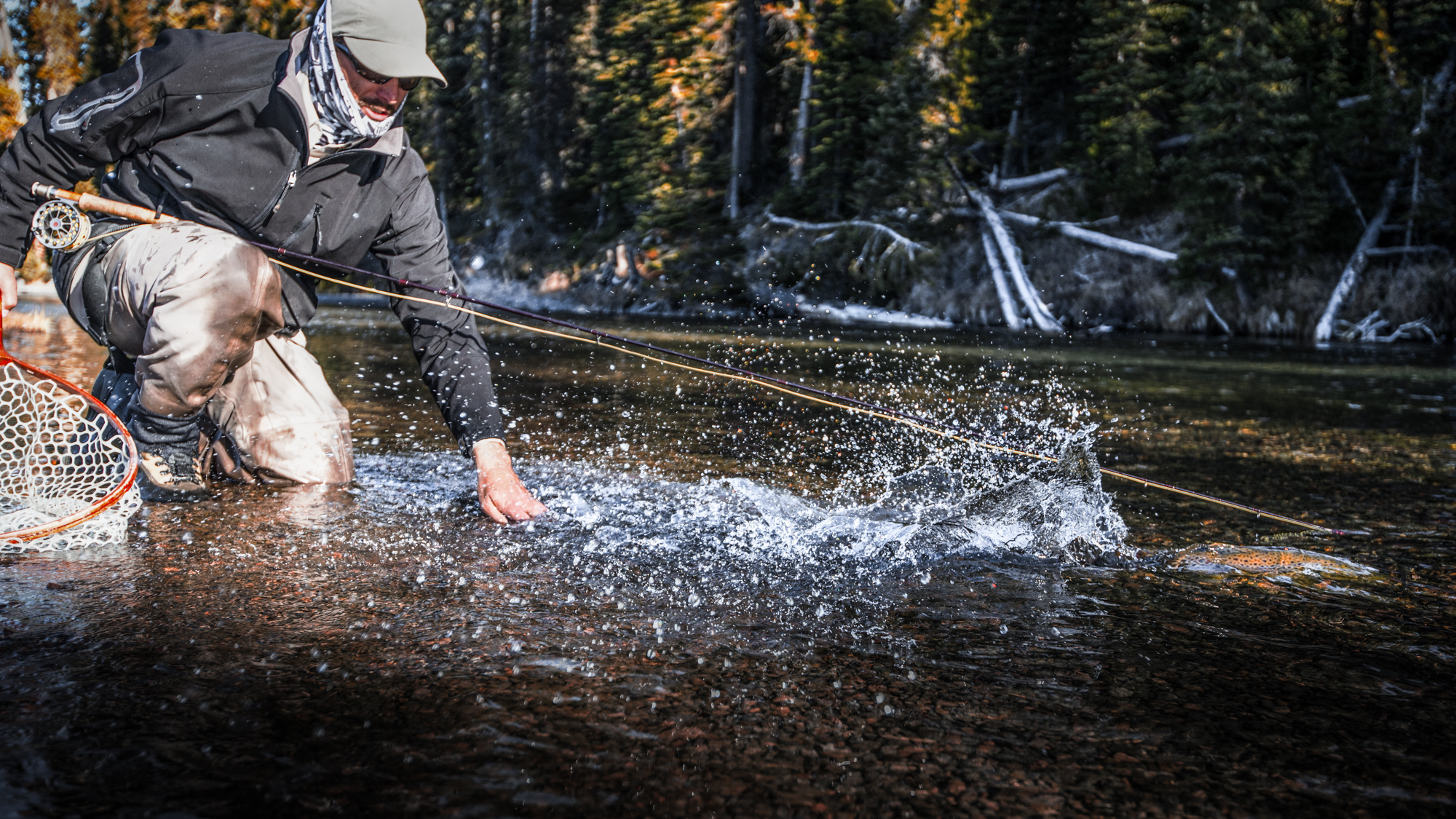 There's a certain sense of vitality that's particular to release shots, and this one -- of a trout fleeing with zeal after being unhooked -- illustrates thats sense perfectly.