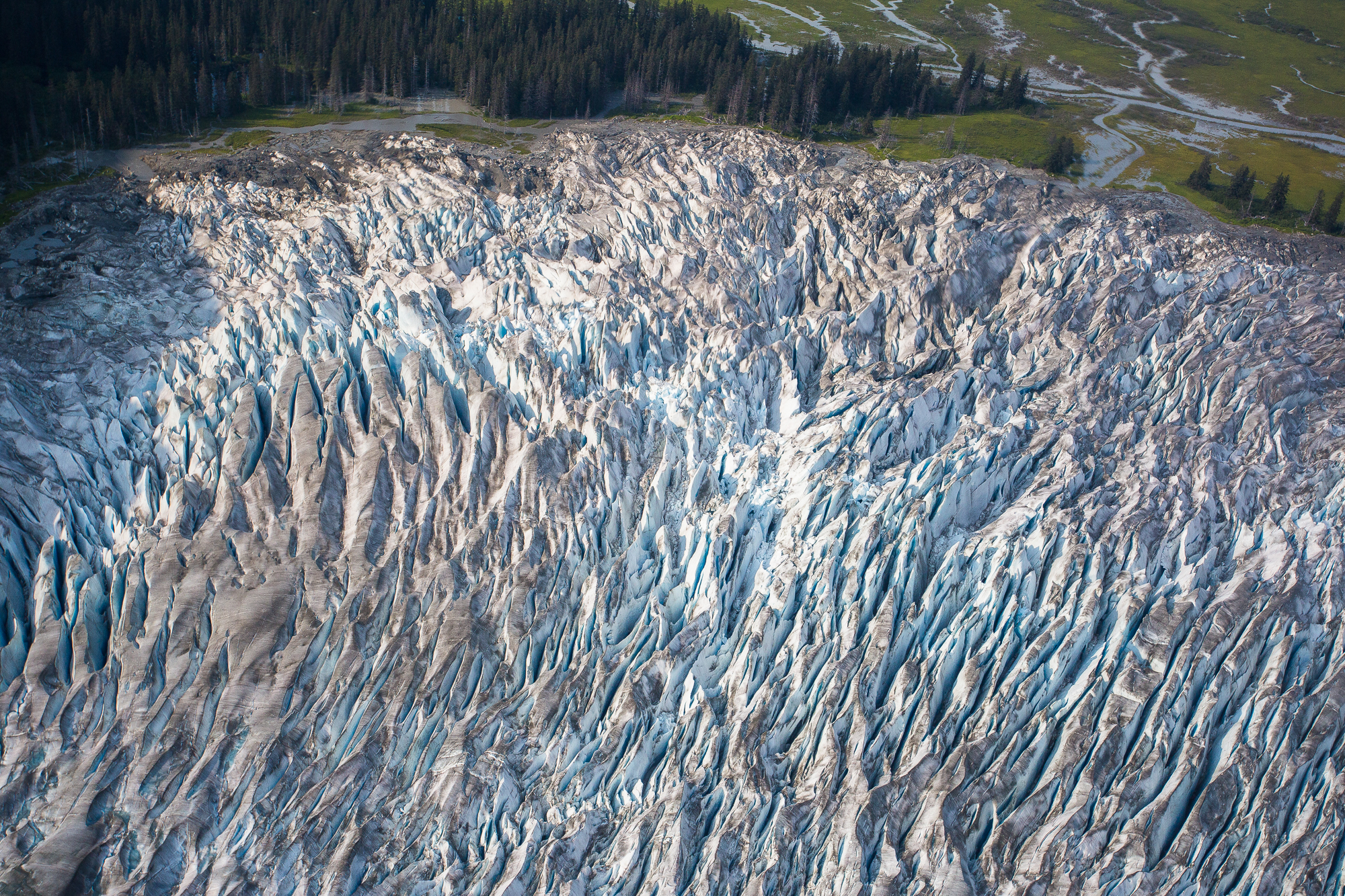 The Taku continues to advance, unlike many other glaciers in the region, which have been negatively impacted by climate change. Of the 20 glaciers in the Juneau Icefield, only the Taku is still advancing.