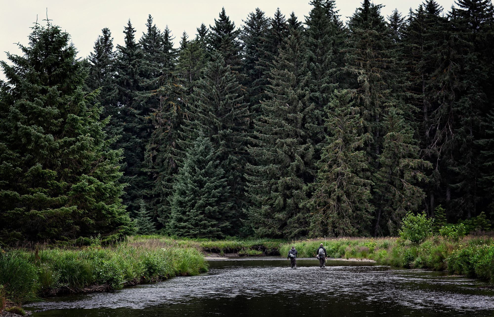 (1/5) Once the float plane departs, a long walk through thick meadows of rain-soaked marsh grasses ensues, eventually yielding the the chum salmon choked creek. As expected, hordes of dolly varden have followed the spawning chum in to feast on their eggs, and we've followed the dollies (photo: Earl Harper).