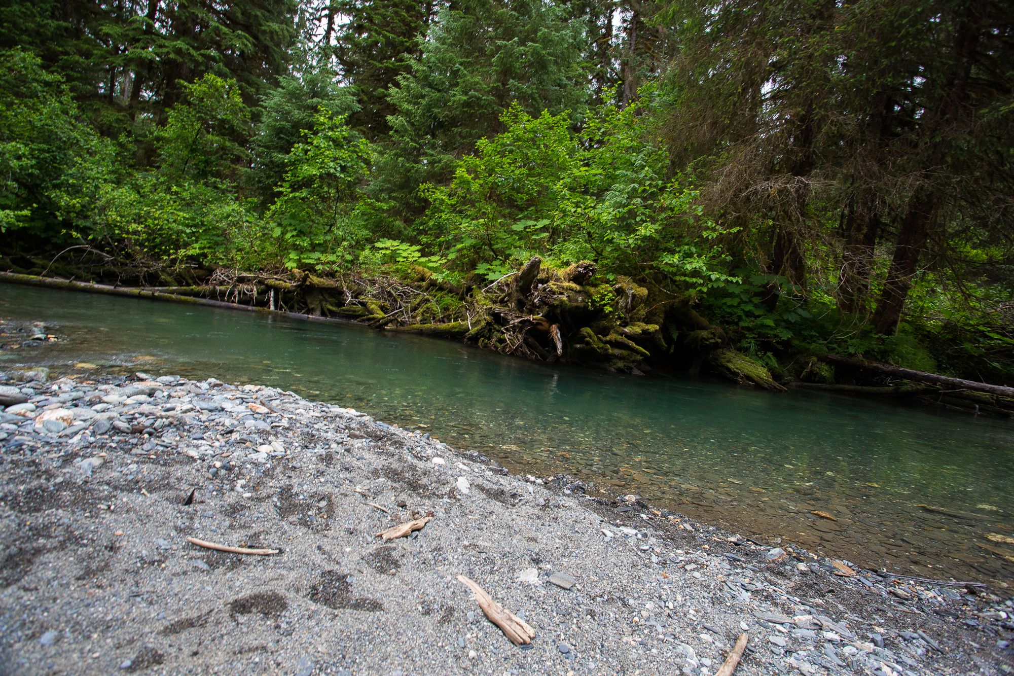 (3/3) Coursing through the Juneau town limits is Montana Creek, a clearwater tributary to the Mendenhall River. Montana Creek offers outstanding fishing for coho, chum and pink salmon, dolly varden and even steelhead. Montana Creek, despite being located in very close proximity to fairly densely developed recreational areas, remains undeveloped and pristine (photo: Chad Shmukler).