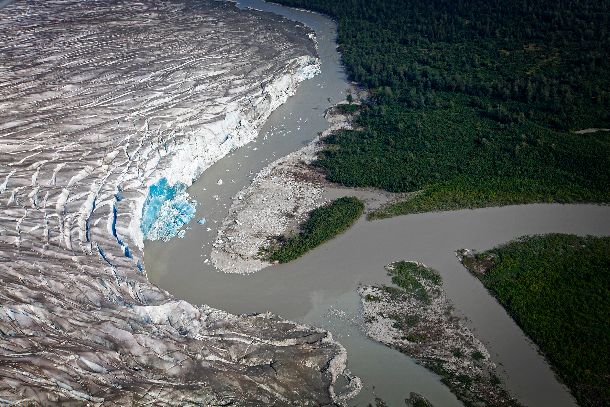 Iridescent blue ice is revealed as a small portion of the Taku Glacier, near the glacier's snout, calves into the grey meltwater below (photo: Earl Harper).