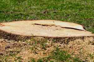 cut tree