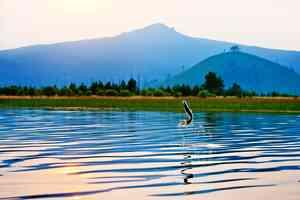 stillwater trout fishing