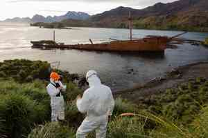 Norway rat eradication using brodifacoum on South Georgia Island