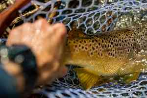southern trout | south holston river fly fishing