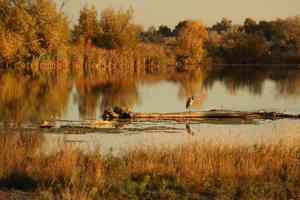 autumn on the snake river idaho
