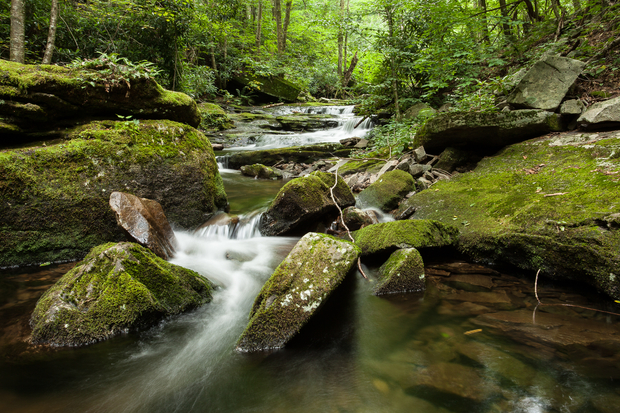 Pennsylvania conservatives continue assault on wild trout for Penns fish house