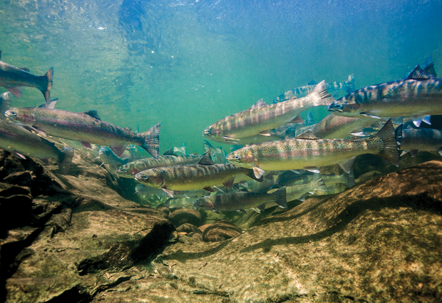 underwater fishing photography: the gear | hatch magazine - fly, Reel Combo