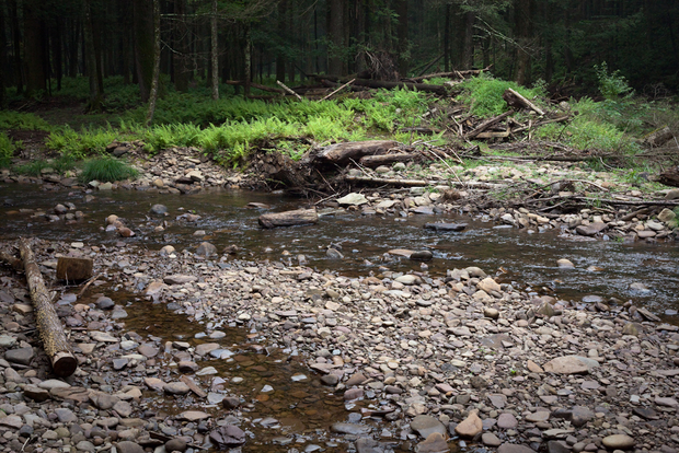 A native brook trout stream in Pennsylvania's natural gas country.