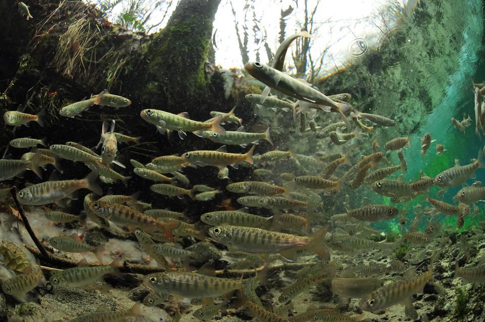Into the Salmon World - Paul Vecsei