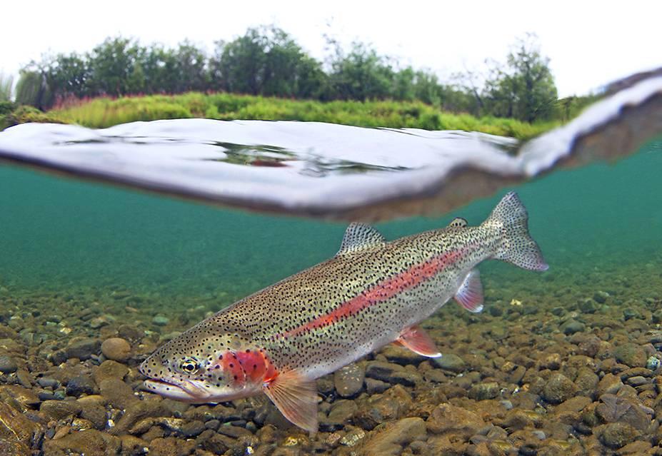 Leopard Rainbow