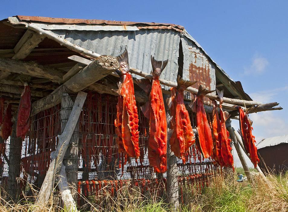 Salmon Drying Station