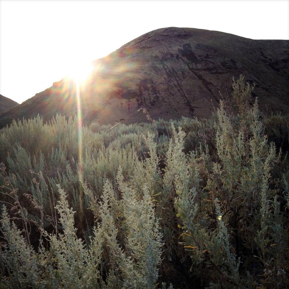 Morning Sagebrush