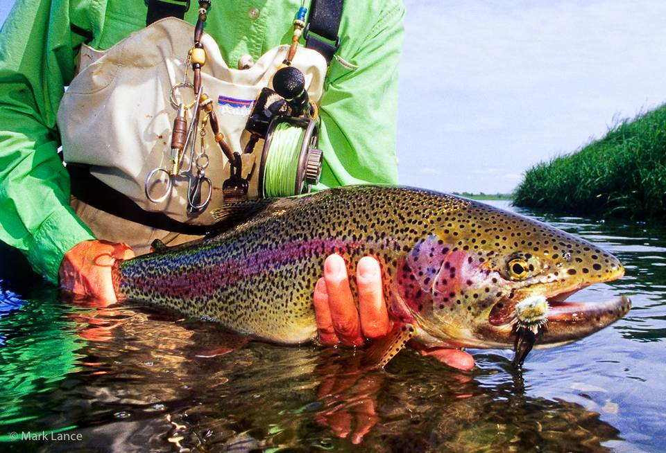 Kamchatka Fly Fishing - Rainbow Trout
