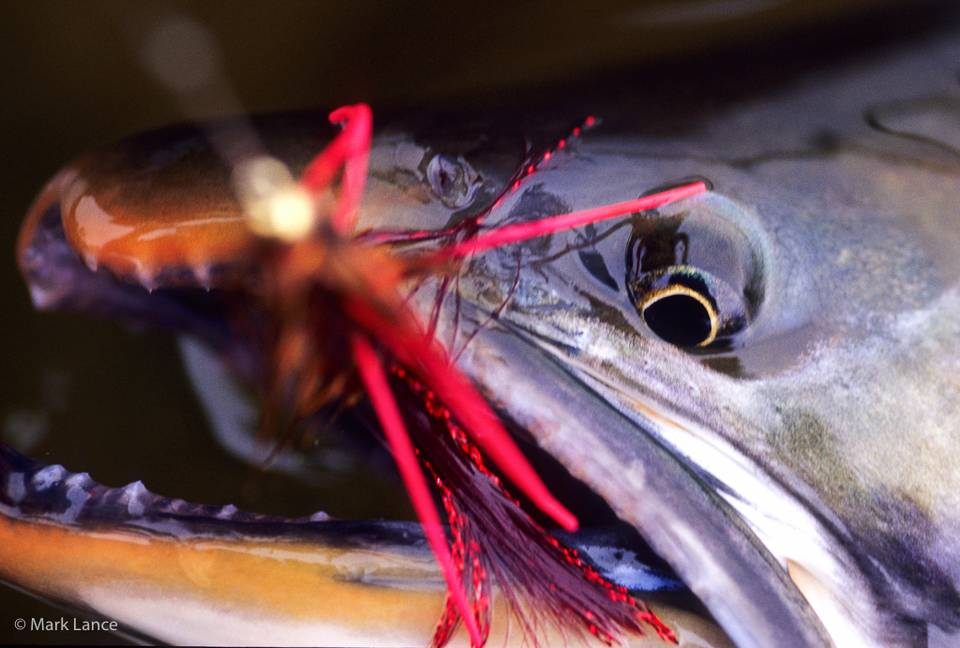 Kamchatka Fly Fishing - Dolly Varden