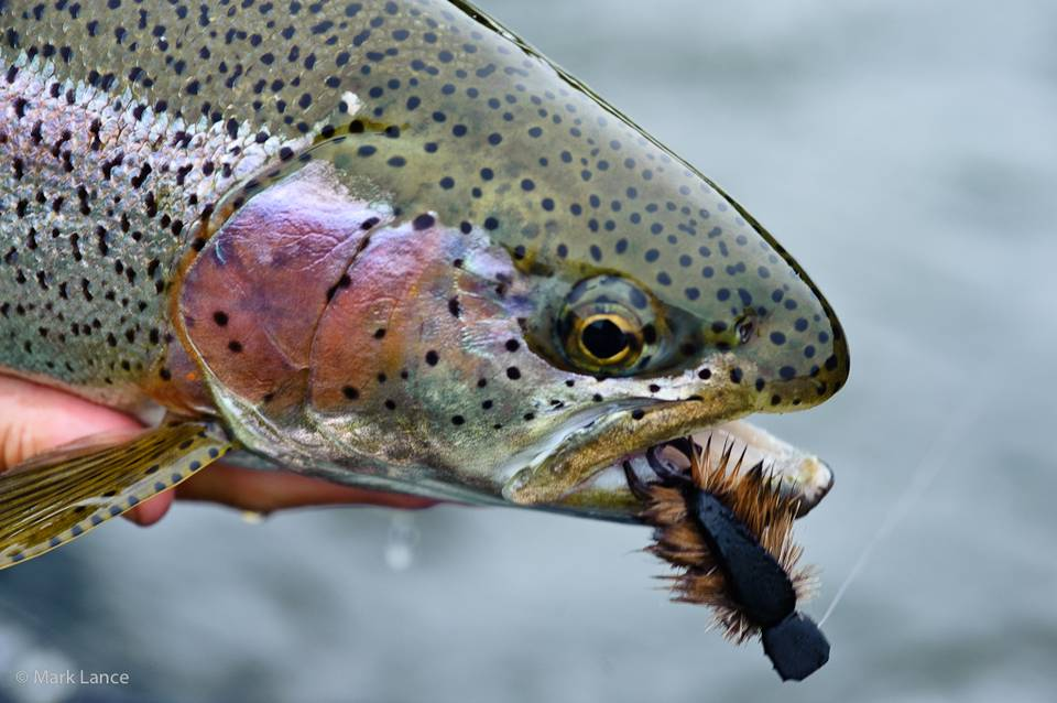 Kamchatka Fly Fishing - Rainbow Trout 2
