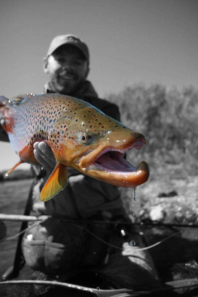 South Platte River Brown Trout