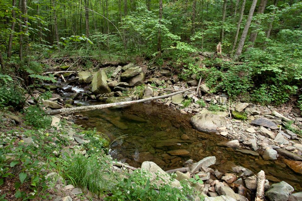 Freestone Stream 4