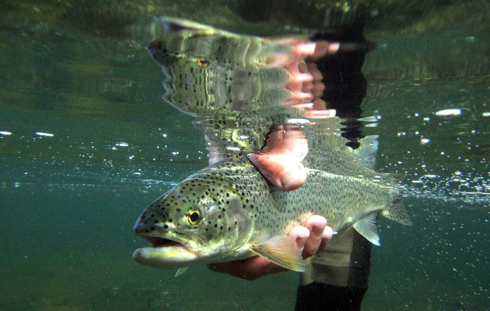 Photography fly fishing puget sound part ii hatch for Salmon fishing puget sound