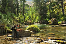 12 Dry Fly Fishing Tips
