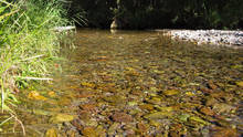 creek low water