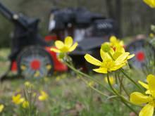 lawnmower wildflowers