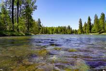 montana trout river